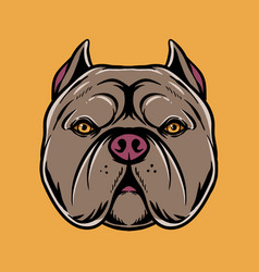 pitbull head vector image