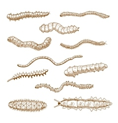Caterpillars earthworms slug and centipedes vector image vector image
