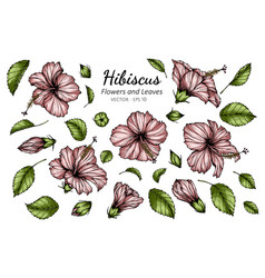 Set pink hibiscus flower and leaf drawing with vector
