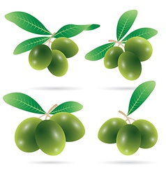 set of olives vector image vector image