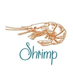 Marine shrimp or prawn sketch in engraving style vector image