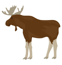 moose isolated on white background vector image