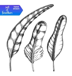 Hand drawn feather set vector image