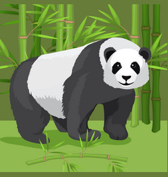 black and white heavy panda stands on paws bamboo vector image