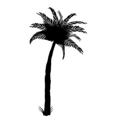 silhouette of coconut palm tree isolated on white vector image