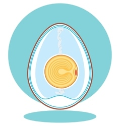 Chicken embryo egg vector