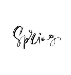 spring wonderland text hand drawn brush lettering vector image