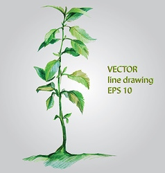 Watercolor plant vector