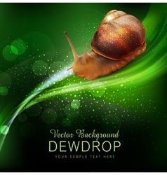 snail crawling on the green leaf vector image vector image