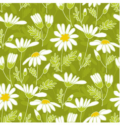 chamomile hand drawn color seamless pattern vector image