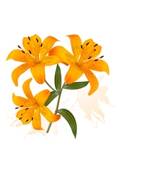 Flower background with three beautiful lilies vector
