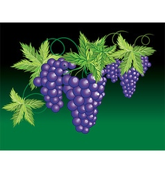 Grapevine design vector