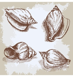 Seashells hand drawn graphic vintage etching vector image