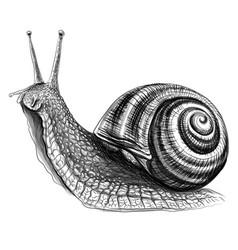 snail sketch drawn graphic portrait vector image