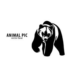 vector bear vector image