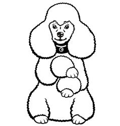 poodle black and white vector image vector image
