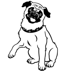 pug black and white vector image