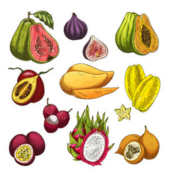 exotic fruit tropical farm product sketch set vector image