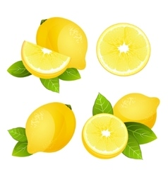 Fresh lemon fruit slice set Collection of vector