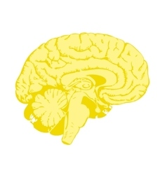 Golden brain vector image
