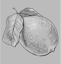 grey fruit-7 vector image