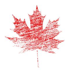 grunge maple leaf vector image