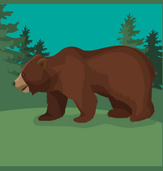 large brown bear side view close-up walking in vector image