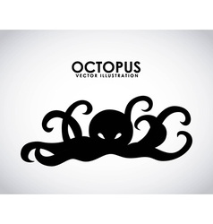 Octopus design vector