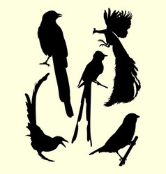 Peacock hummingbirds silhouette vector
