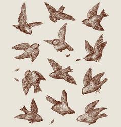 Sparrows vector