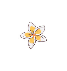 White and yellow plumeria or frangipani flower vector