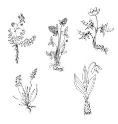 Wild plants with roots vector
