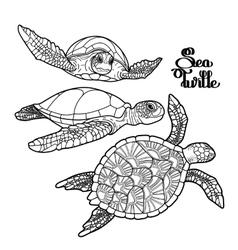 Hawksbill sea turtle collection vector image vector image