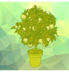 Citrus tangerine orange or citrus tree in a pot vector image vector image