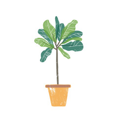 croton plant in ceramic pot flat vector image