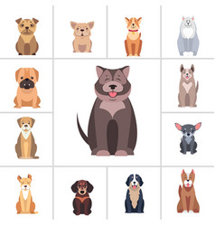 Cute purebred dogs cartoon flat icons set vector