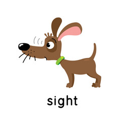 Dog stands and looks five senses sight vector