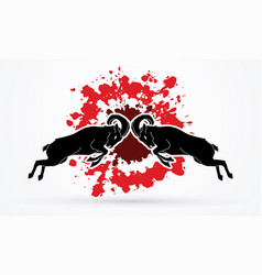 ibex fighting mountain goat battle vector image