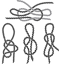sea knot 1 vector image