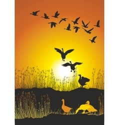 Migrating geese at sunse vector image
