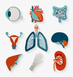 Medical icons of internal human organs vector image
