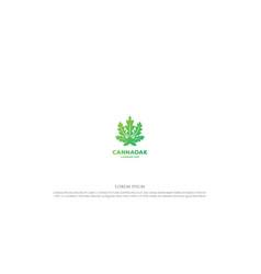Modern oak or papaya cannabis leaf for herbal vector
