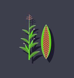 Paper sticker on background of zea mays vector