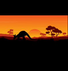 beauty silhouette of kangaroo landscape vector image