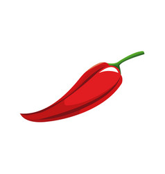 chili pepper spice cooking design vector image vector image
