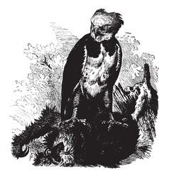 Harpy eagle vintage vector
