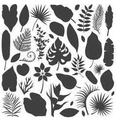 tropical leaves silhouettes vector image