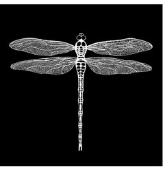dragonfly white dragonfly on black background vector image