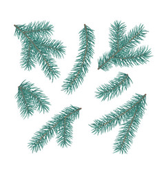 green fir branches set of a christmas tree vector image
