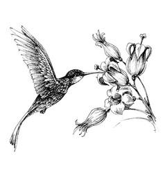Hummingbird in flight drawing vector